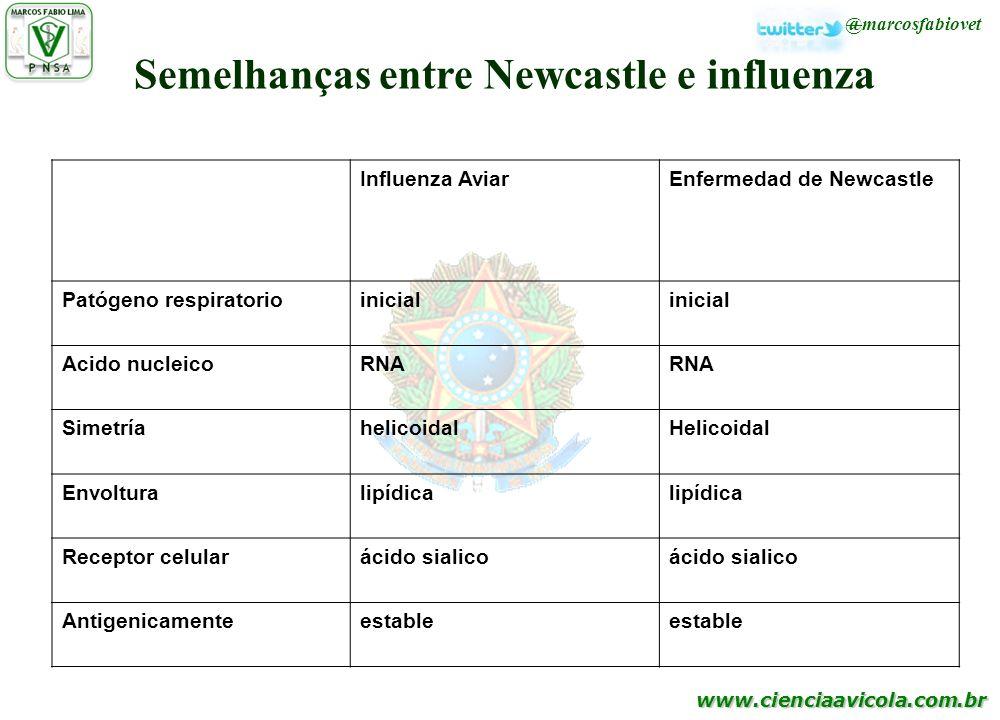 www.cienciaavicola.com.br @marcosfabiovet Influenza AviarEnfermedad de Newcastle Patógeno respiratorioinicial Acido nucleicoRNA SimetríahelicoidalHeli
