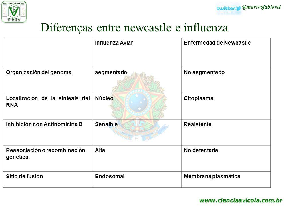 www.cienciaavicola.com.br @marcosfabiovet Influenza AviarEnfermedad de Newcastle Organización del genomasegmentadoNo segmentado Localización de la sín