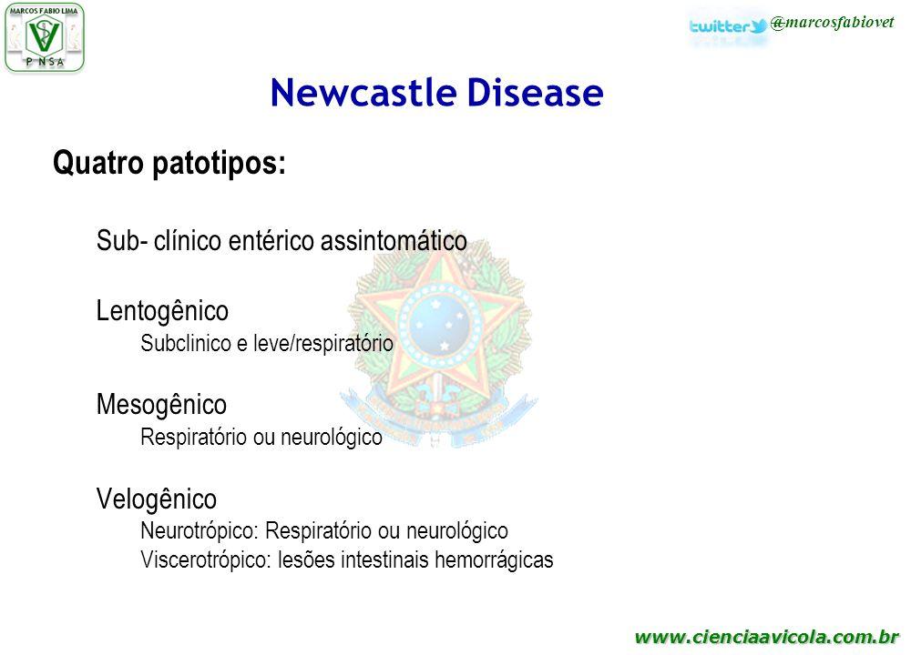 www.cienciaavicola.com.br @marcosfabiovet Newcastle Disease Quatro patotipos: Sub- clínico entérico assintomático Lentogênico Subclinico e leve/respir