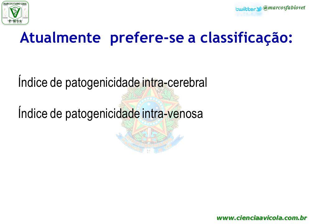 www.cienciaavicola.com.br @marcosfabiovet Atualmente prefere-se a classificação: Índice de patogenicidade intra-cerebral Índice de patogenicidade intr