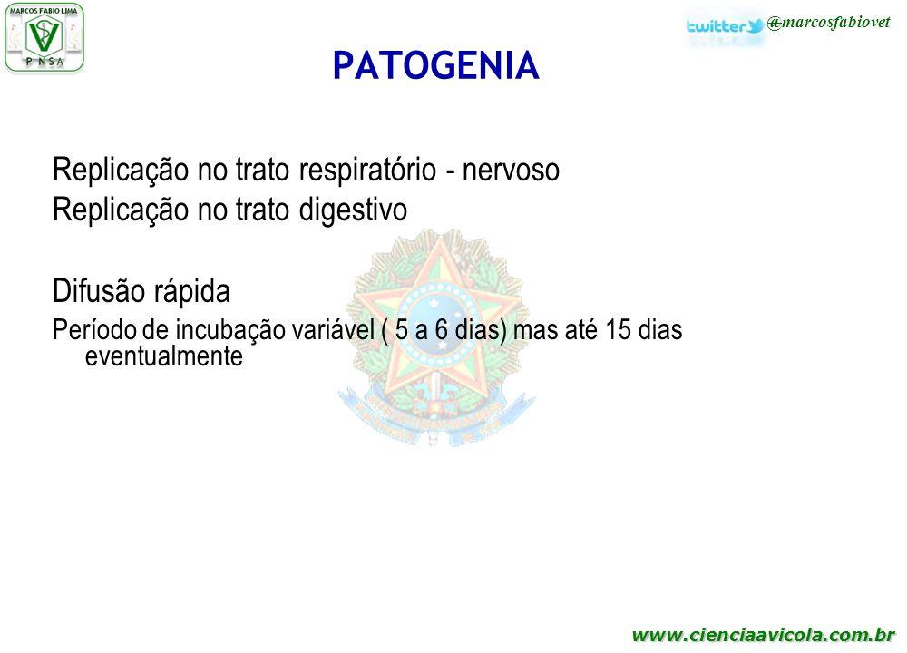 www.cienciaavicola.com.br @marcosfabiovet PATOGENIA Replicação no trato respiratório - nervoso Replicação no trato digestivo Difusão rápida Período de