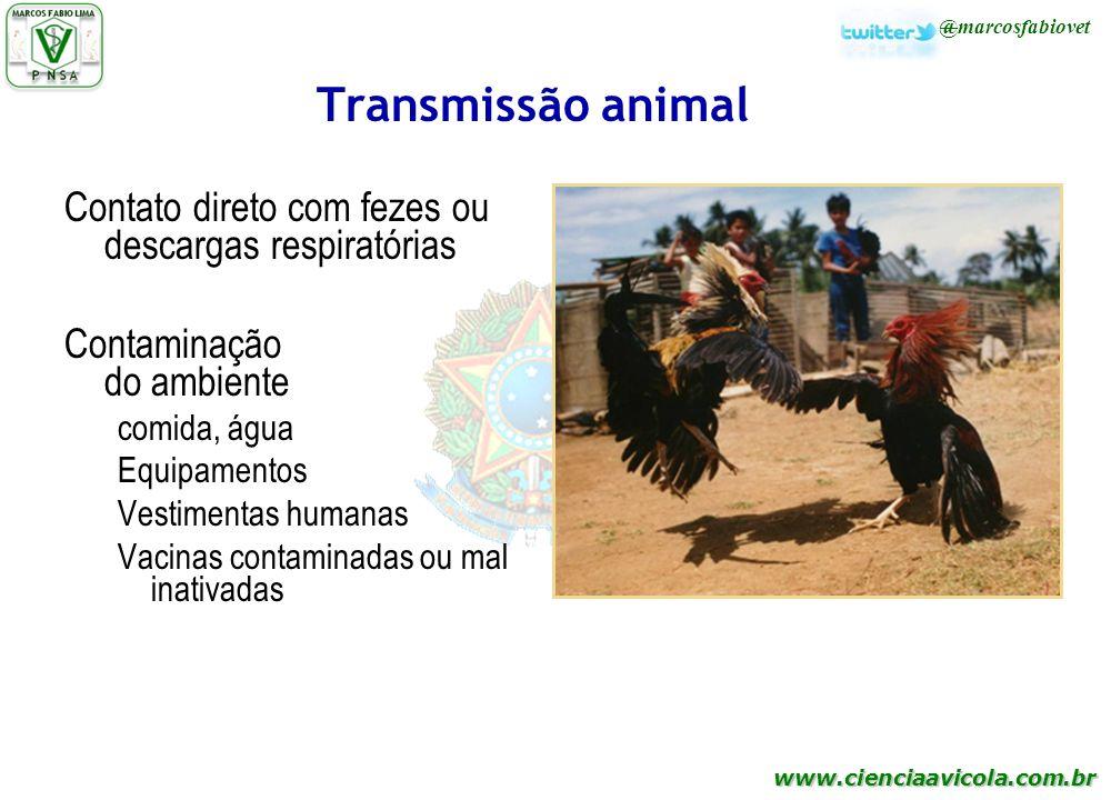 www.cienciaavicola.com.br @marcosfabiovet Transmissão animal Contato direto com fezes ou descargas respiratórias Contaminação do ambiente comida, água