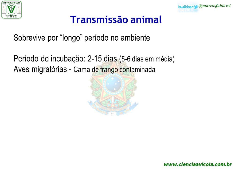 www.cienciaavicola.com.br @marcosfabiovet Transmissão animal Sobrevive por longo período no ambiente Período de incubação: 2-15 dias ( 5-6 dias em méd