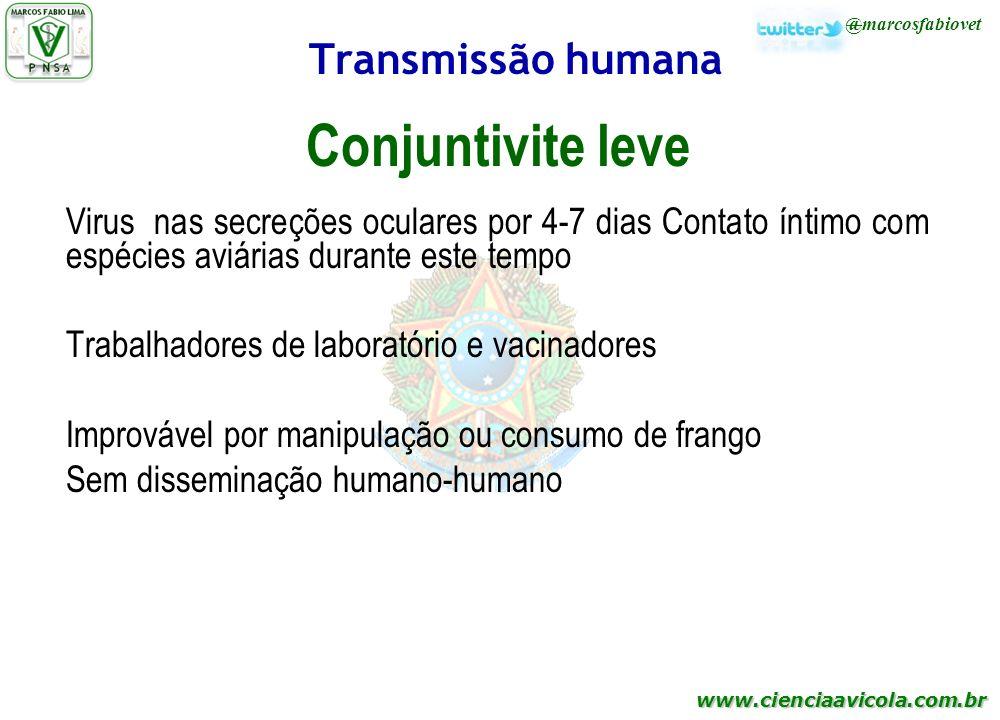 www.cienciaavicola.com.br @marcosfabiovet Transmissão humana Conjuntivite leve Virus nas secreções oculares por 4-7 dias Contato íntimo com espécies a