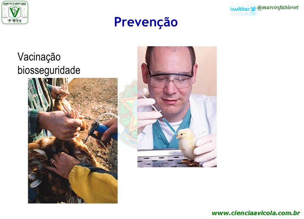 www.cienciaavicola.com.br @marcosfabiovet Prevenção Vacinação biosseguridade