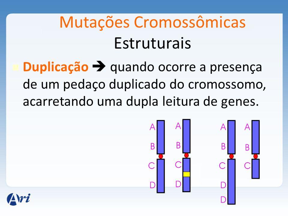 Mutações Cromossômicas Estruturais Duplicação quando ocorre a presença de um pedaço duplicado do cromossomo, acarretando uma dupla leitura de genes.