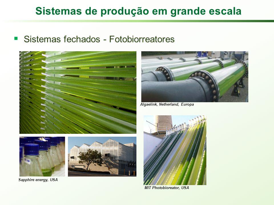 Sistemas de produção em grande escala Sistemas fechados - Fotobiorreatores Sapphire energy, USA Algaelink, Netherland, Europa MIT Photobioreator, USA