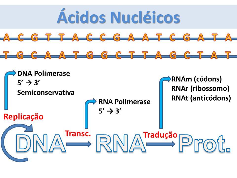 Replicação Tradução Transc. DNA Polimerase 5 3 Semiconservativa RNA Polimerase 5 3 RNAm (códons) RNAr (ribossomo) RNAt (anticódons) Ácidos Nucléicos