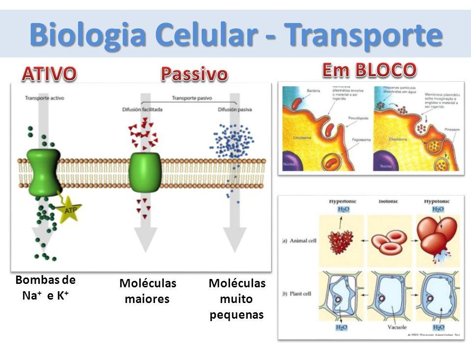 Fisiologia Humana - Excreção PlatelmintosCélulas-flama NematelmintosTubos em H AnelídeosNefrídeos ArtrópodosC A I D Q MoluscosNefrídeos EquinodermosAmbulacral CordadosRenal AmôniaÁc.