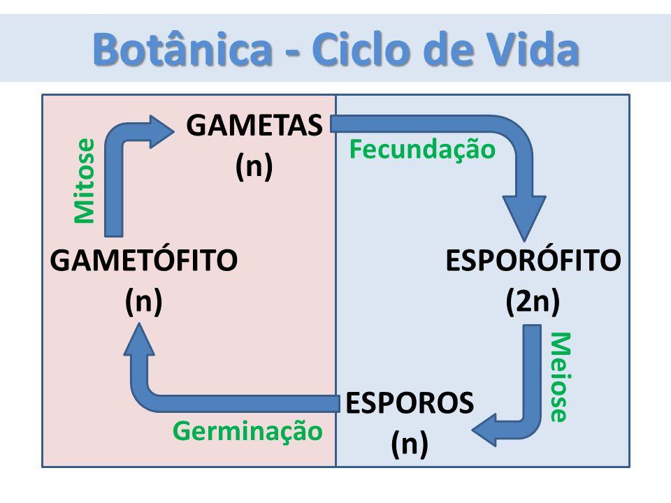 GAMETÓFITO (n) ESPORÓFITO (2n) GAMETAS (n) Fecundação Mitose ESPOROS (n) Meiose Germinação Botânica - Ciclo de Vida