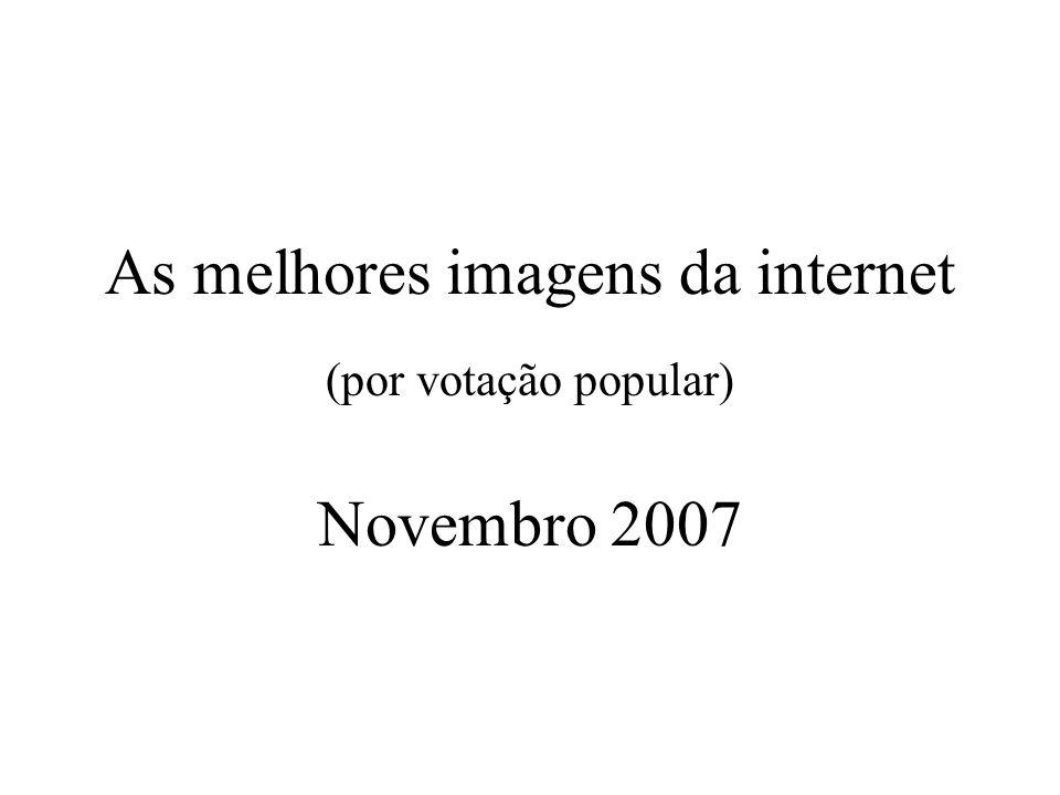 As melhores imagens da internet (por votação popular) Novembro 2007