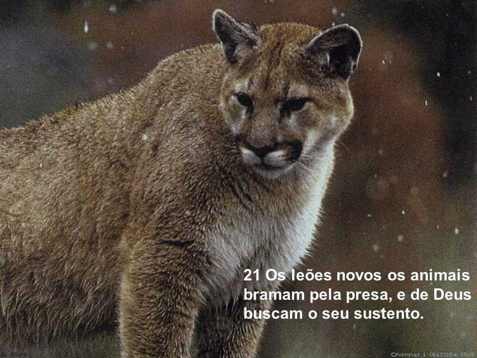 21 Os leões novos os animais bramam pela presa, e de Deus buscam o seu sustento.