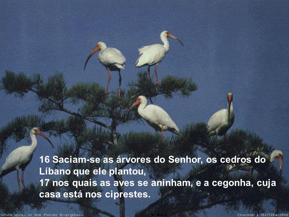 16 Saciam-se as árvores do Senhor, os cedros do Líbano que ele plantou, 17 nos quais as aves se aninham, e a cegonha, cuja casa está nos ciprestes.