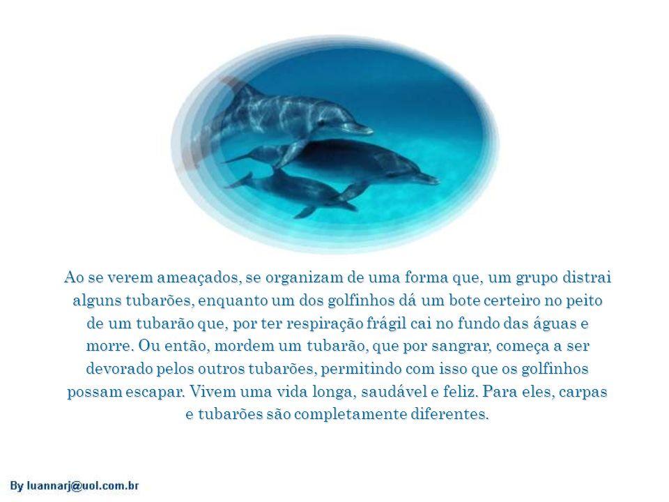 Os golfinhos ocupam todas as águas com graça, alegria, vida. Comem somente quando têm fome e só os peixes pequenos. São organizados, cooperativos e se