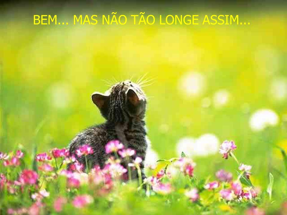 MUITO LONGE...