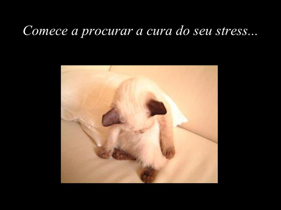 Comece a procurar a cura do seu stress...