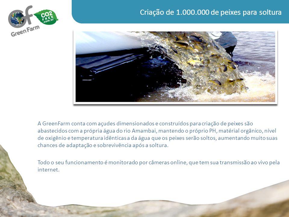 Plantio de árvores VIVEIRO com capacidade de 300.000 mudas de espécies nativas e frutíferas.