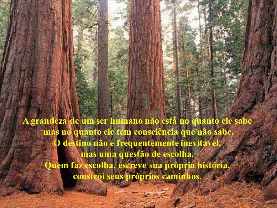 A grandeza de um ser humano não está no quanto ele sabe mas no quanto ele tem consciência que não sabe.