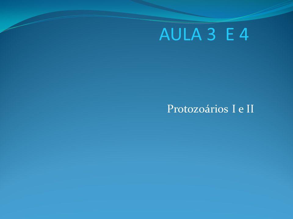 AULA 3 E 4 Protozoários I e II