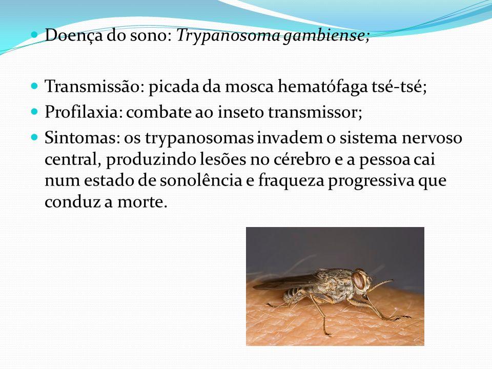 Doença do sono: Trypanosoma gambiense; Transmissão: picada da mosca hematófaga tsé-tsé; Profilaxia: combate ao inseto transmissor; Sintomas: os trypan