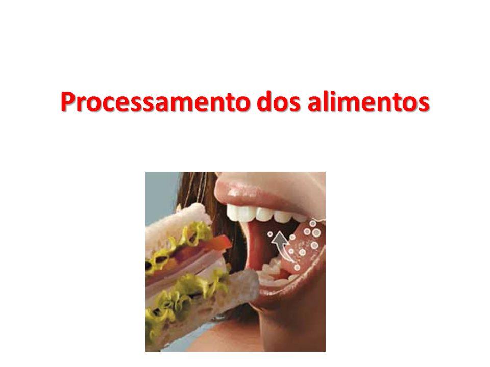 Processamento dos alimentos