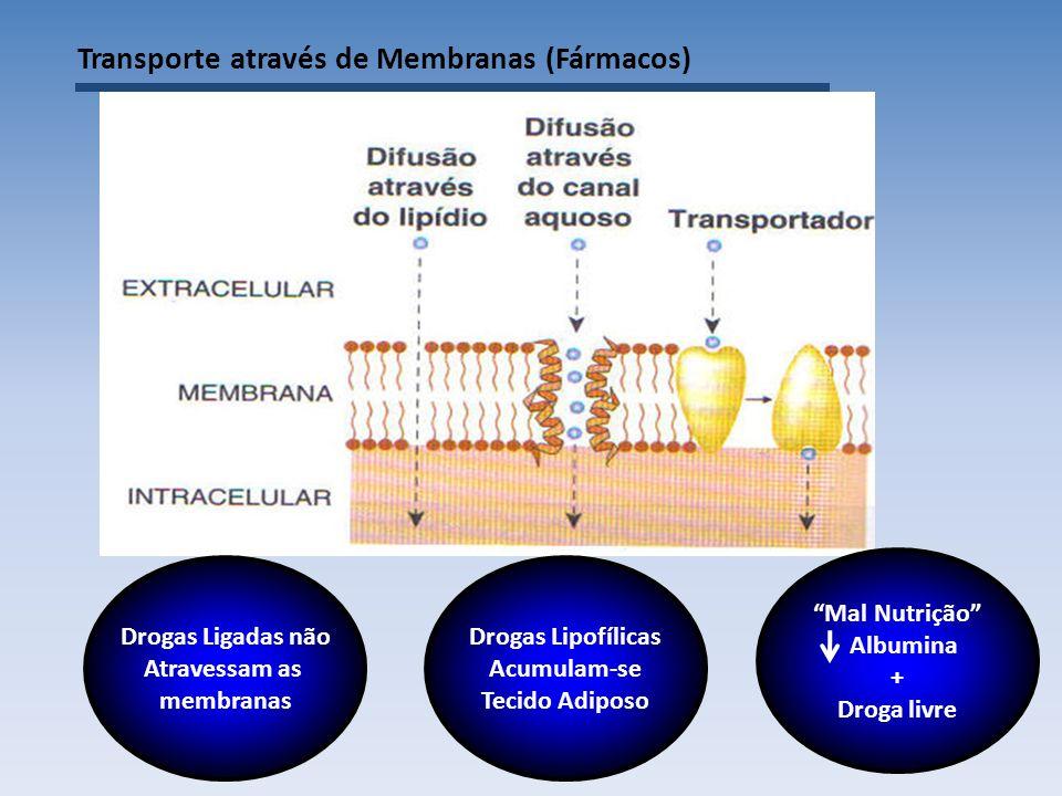 Transporte através de Membranas (Fármacos) Drogas Ligadas não Atravessam as membranas Drogas Lipofílicas Acumulam-se Tecido Adiposo Mal Nutrição Albumina + Droga livre
