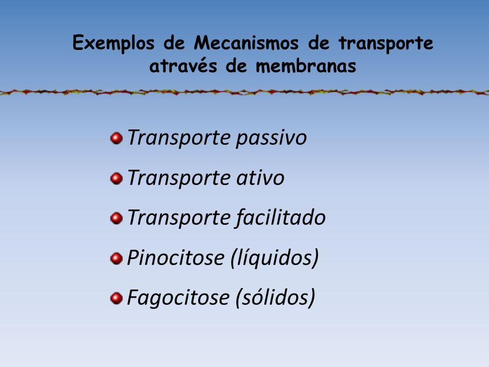 Exemplos de Mecanismos de transporte através de membranas Transporte passivo Transporte ativo Transporte facilitado Pinocitose (líquidos) Fagocitose (sólidos)
