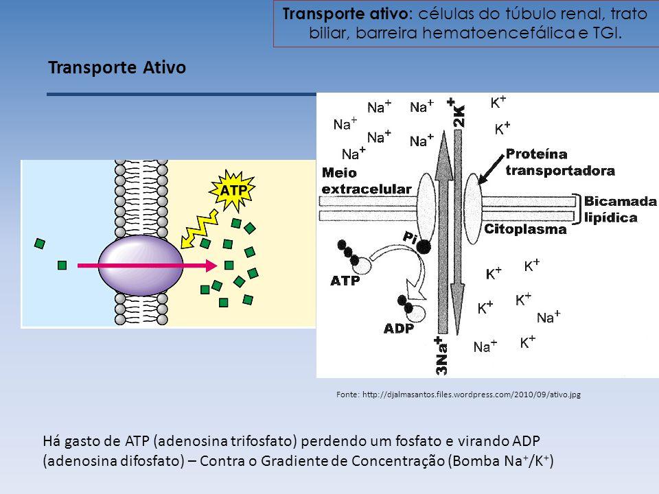 Transporte Ativo Há gasto de ATP (adenosina trifosfato) perdendo um fosfato e virando ADP (adenosina difosfato) – Contra o Gradiente de Concentração (Bomba Na + /K + ) Fonte: http://djalmasantos.files.wordpress.com/2010/09/ativo.jpg Transporte ativo : células do túbulo renal, trato biliar, barreira hematoencefálica e TGI.