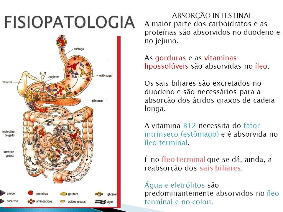ABSORÇÃO INTESTINAL A maior parte dos carboidratos e as proteínas são absorvidos no duodeno e no jejuno. As gorduras e as vitaminas lipossolúveis são