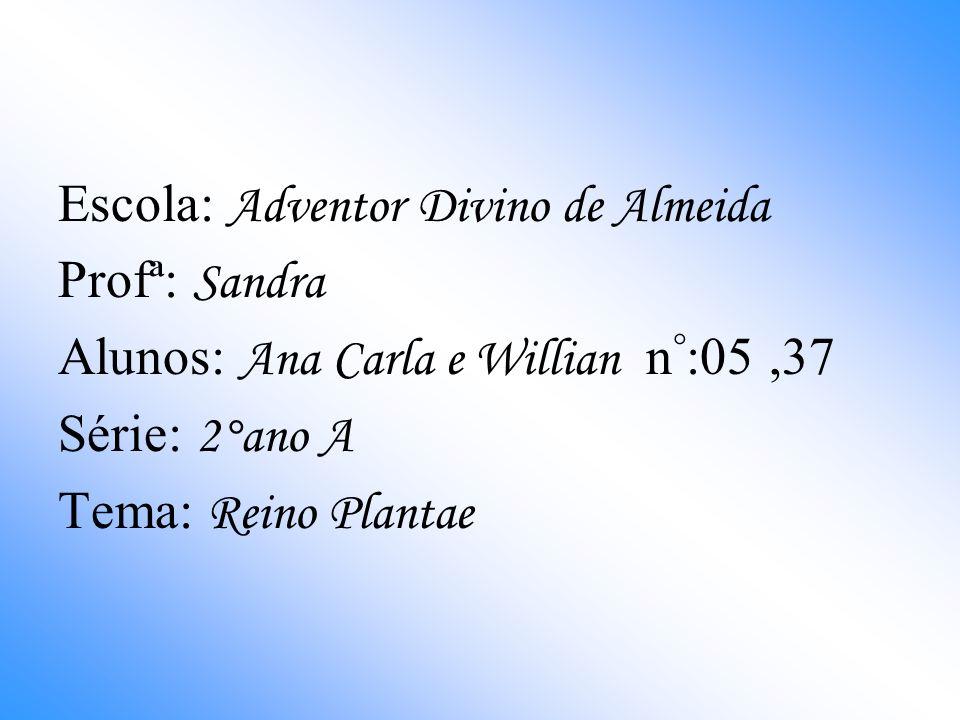 Escola: Adventor Divino de Almeida Profª: Sandra Alunos: Ana Carla e Willian n ° :05,37 Série: 2°ano A Tema: Reino Plantae
