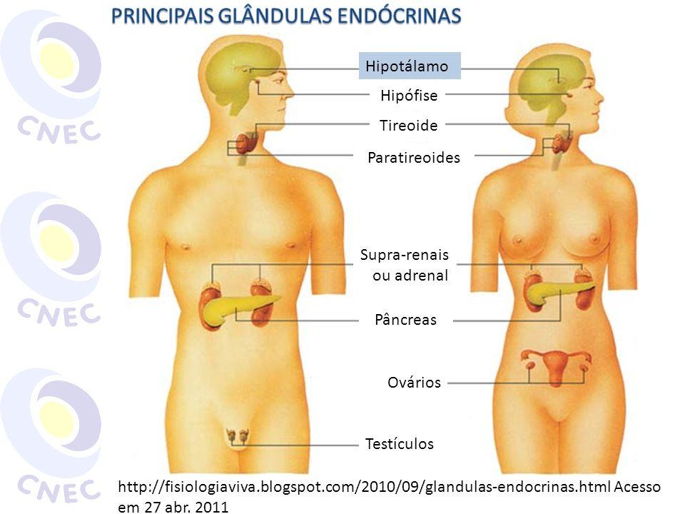 HIPÓFISE (PITUITÁRIA) http://www.sobiologia.com.br/conteudos/FisiologiaAnimal/hormonio2.php Hipotálamo Ocitocina Adeno- hipófise ADH Neurohipófise ProlactinaFSH, LHTSHACTHGH Gl.