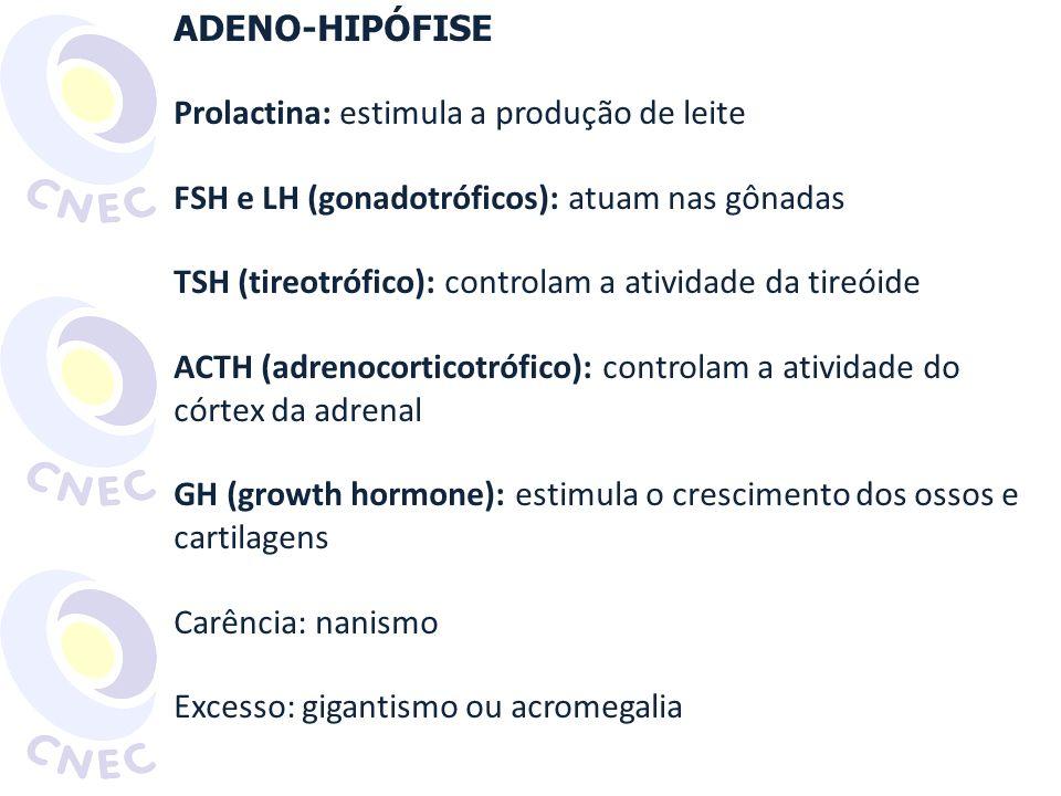 NEURO-HIPÓFISE Secreta hormônios produzidos pelo hipotálamo Ocitocina: estimula contrações uterinas e ejeção do leite Estímulo para liberação: sucção do bebê ADH (antidiurético): aumenta reabsorção de líquido no néfron (reduz o volume de urina) Carência: diabetes insipidus http://www.bemgerar.com/img/fig2ocitocina_e_prolactina_ peq.gif Acesso em 20 abr.