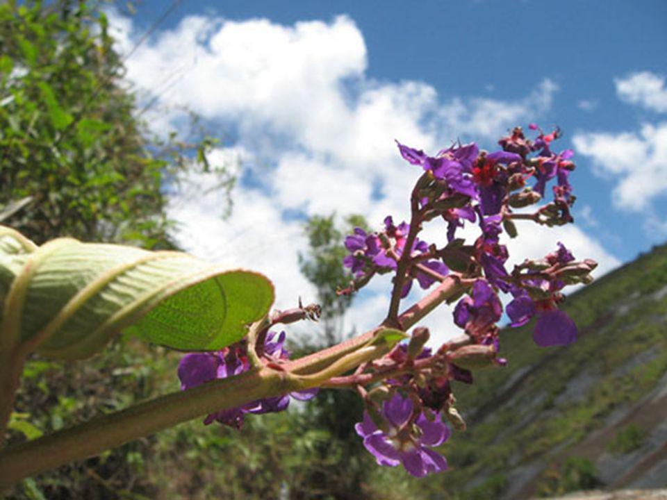 Aprecie a beleza de algumas flores encontradas no local