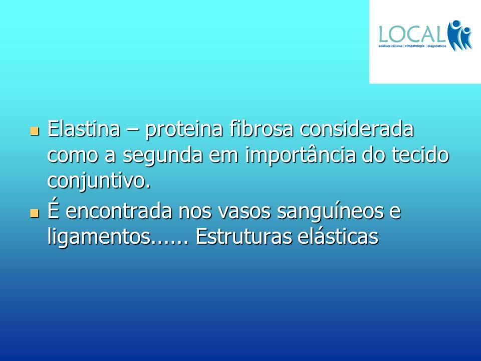 Elastina – proteina fibrosa considerada como a segunda em importância do tecido conjuntivo. Elastina – proteina fibrosa considerada como a segunda em