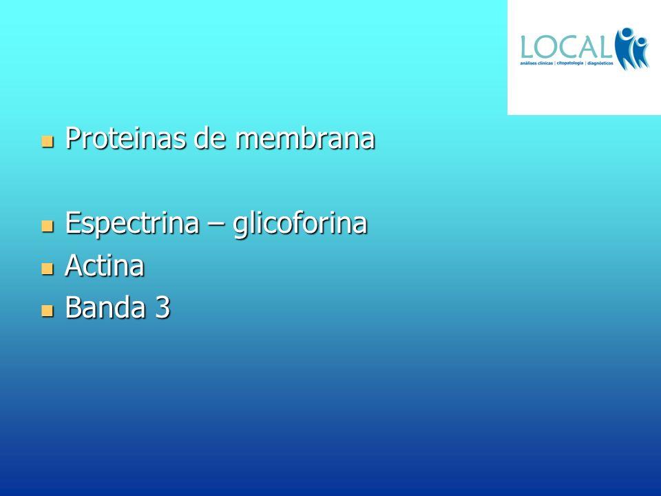 Proteinas de membrana Proteinas de membrana Espectrina – glicoforina Espectrina – glicoforina Actina Actina Banda 3 Banda 3