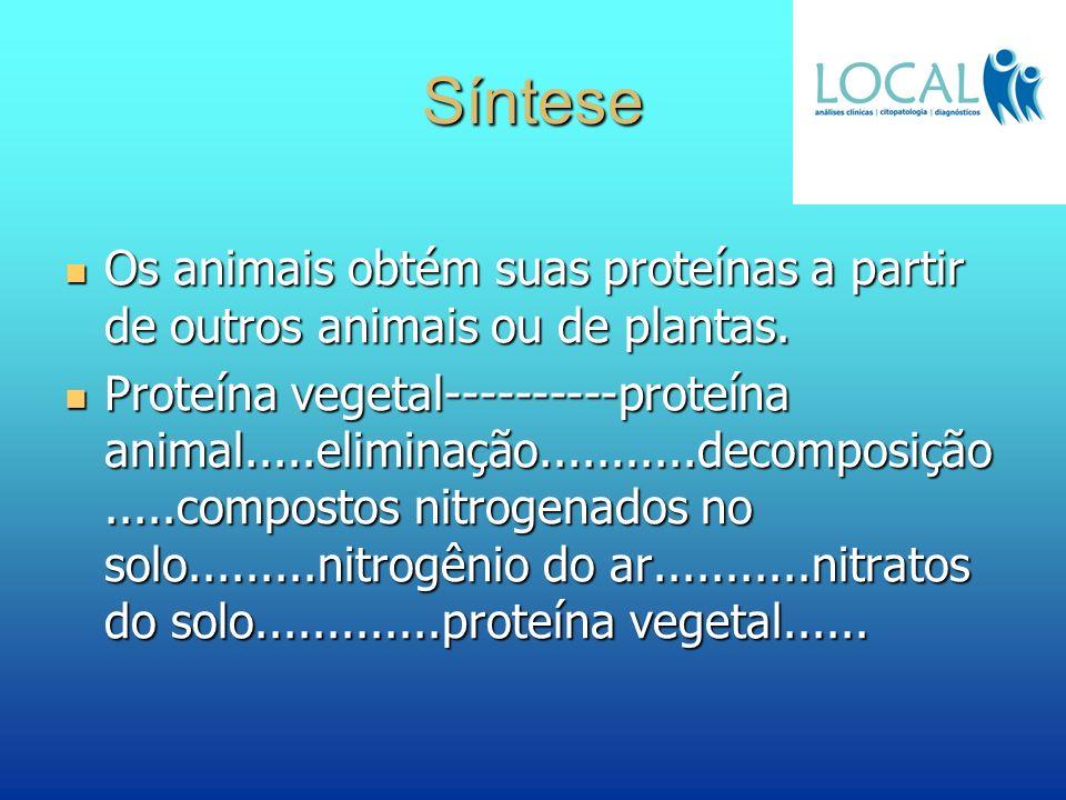 Síntese Os animais obtém suas proteínas a partir de outros animais ou de plantas. Os animais obtém suas proteínas a partir de outros animais ou de pla
