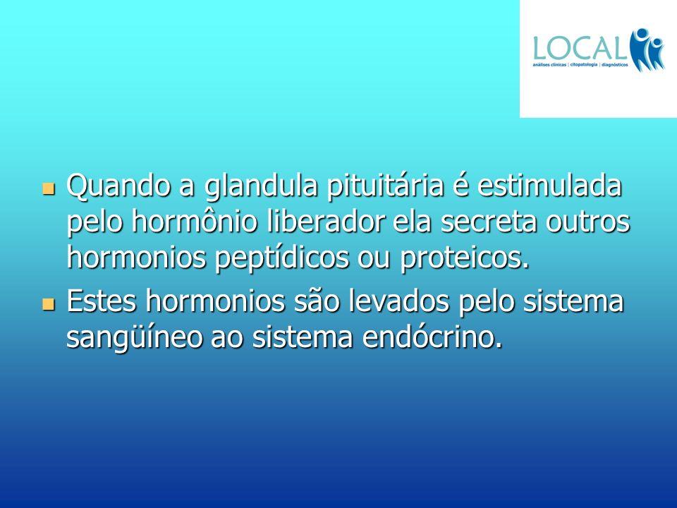 Quando a glandula pituitária é estimulada pelo hormônio liberador ela secreta outros hormonios peptídicos ou proteicos. Quando a glandula pituitária é