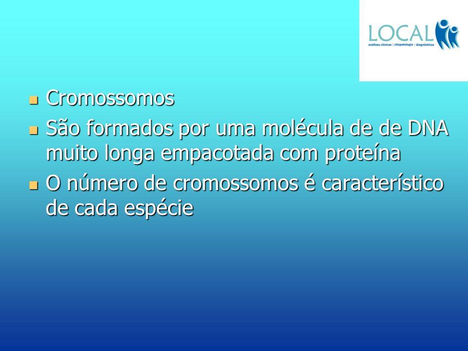 Cromossomos Cromossomos São formados por uma molécula de de DNA muito longa empacotada com proteína São formados por uma molécula de de DNA muito long