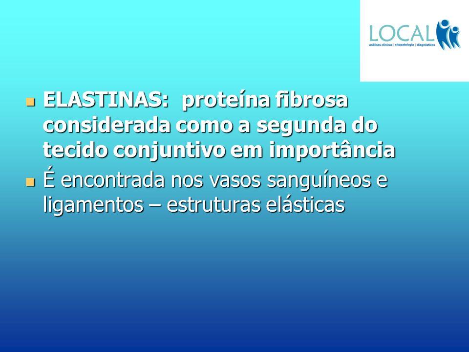 ELASTINAS: proteína fibrosa considerada como a segunda do tecido conjuntivo em importância ELASTINAS: proteína fibrosa considerada como a segunda do t