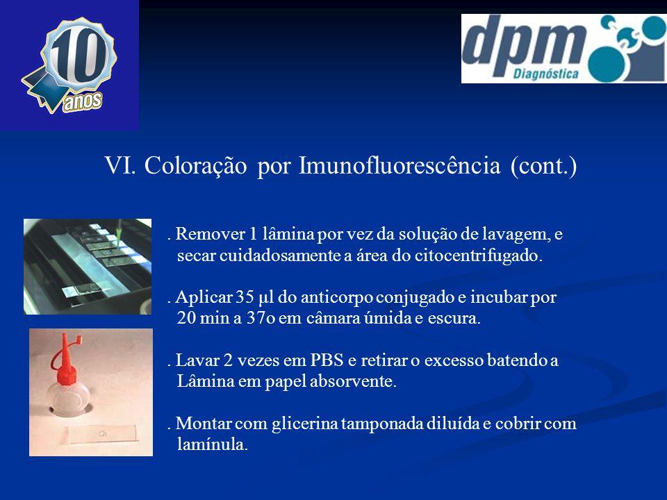 VI. Coloração por Imunofluorescência (cont.). Lavar 2 vezes em PBS e retirar o excesso batendo a Lâmina em papel absorvente.. Aplicar 35 μl do anticor