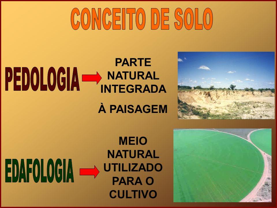 MICRO ORGANISMOS DECOMPOSIÇÃO Formação matéria orgânica VEGETAÇÃO Penetração das raízes Reações químicas Material para decomposição ANIMAIS Resíduos orgânicos Revolvimento dos solos HOMEM Manejo, correção e degradação dos solos