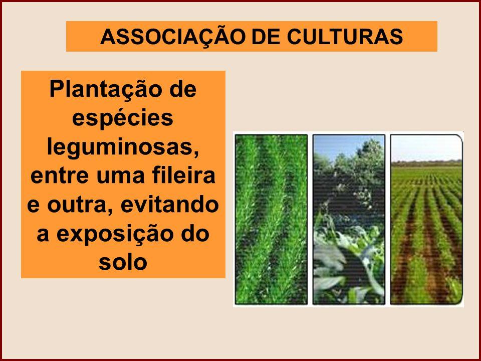 ASSOCIAÇÃO DE CULTURAS Plantação de espécies leguminosas, entre uma fileira e outra, evitando a exposição do solo