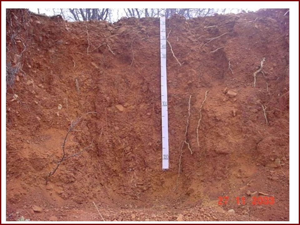 Causada pela água da chuva A erosão inicia-se com o impacto da água no solo exposto Com a declividade do terreno, a água escoa e transporta os sedimentos e nutrientes dos solos
