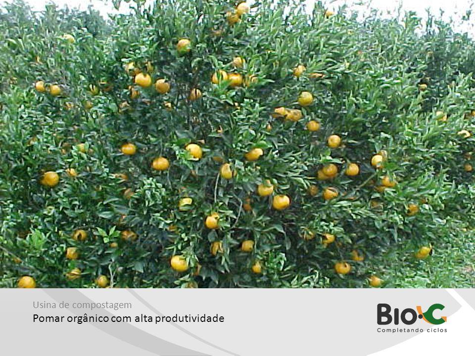 Usina de compostagem Pomar orgânico com alta produtividade