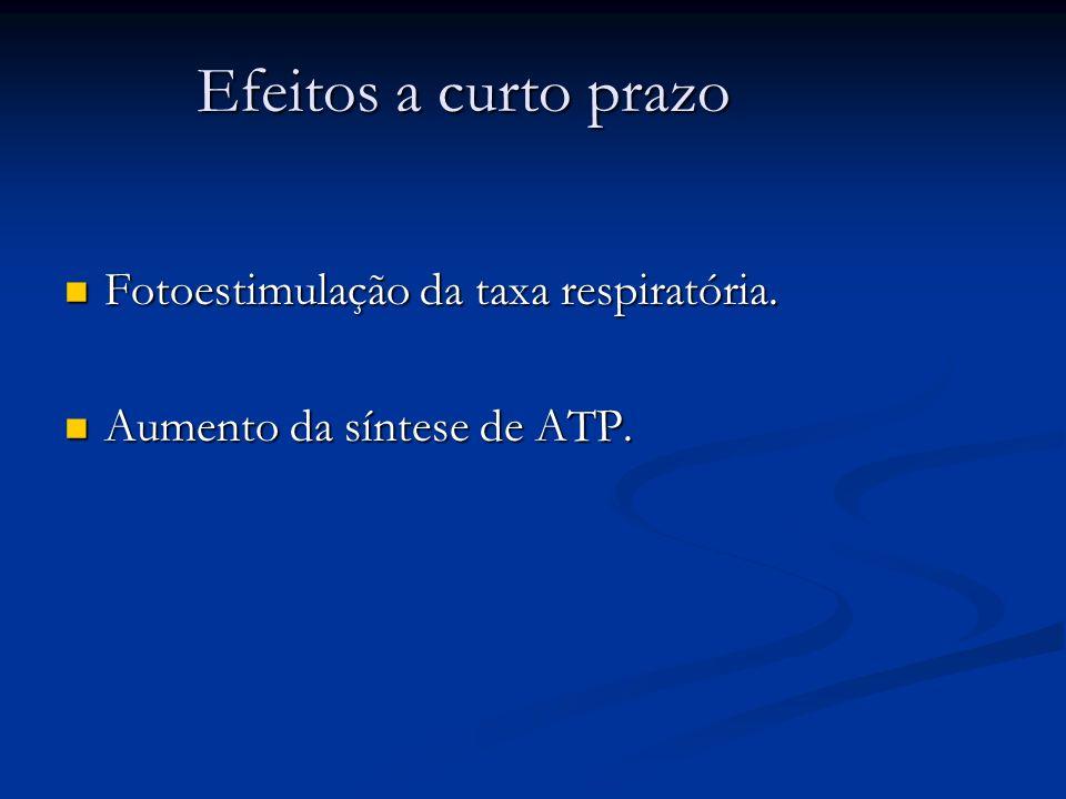 Efeitos a curto prazo Fotoestimulação da taxa respiratória. Fotoestimulação da taxa respiratória. Aumento da síntese de ATP. Aumento da síntese de ATP