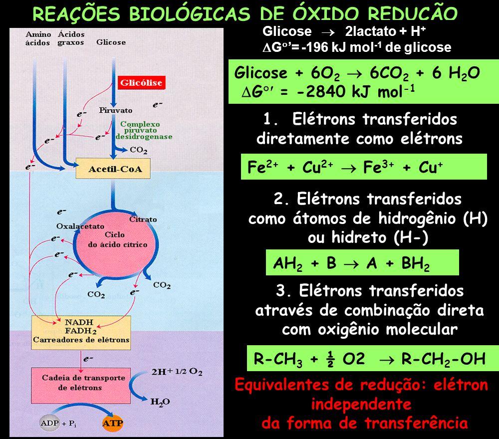 REAÇÕES BIOLÓGICAS DE ÓXIDO REDUÇÃO Glicose + 6O 2 6CO 2 + 6 H 2 O G = -2840 kJ mol -1 Fe 2+ + Cu 2+ Fe 3+ + Cu + 1.Elétrons transferidos diretamente