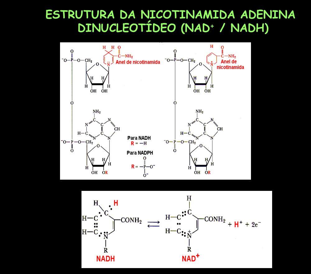 ESTRUTURA DA NICOTINAMIDA ADENINA DINUCLEOTÍDEO (NAD + / NADH)