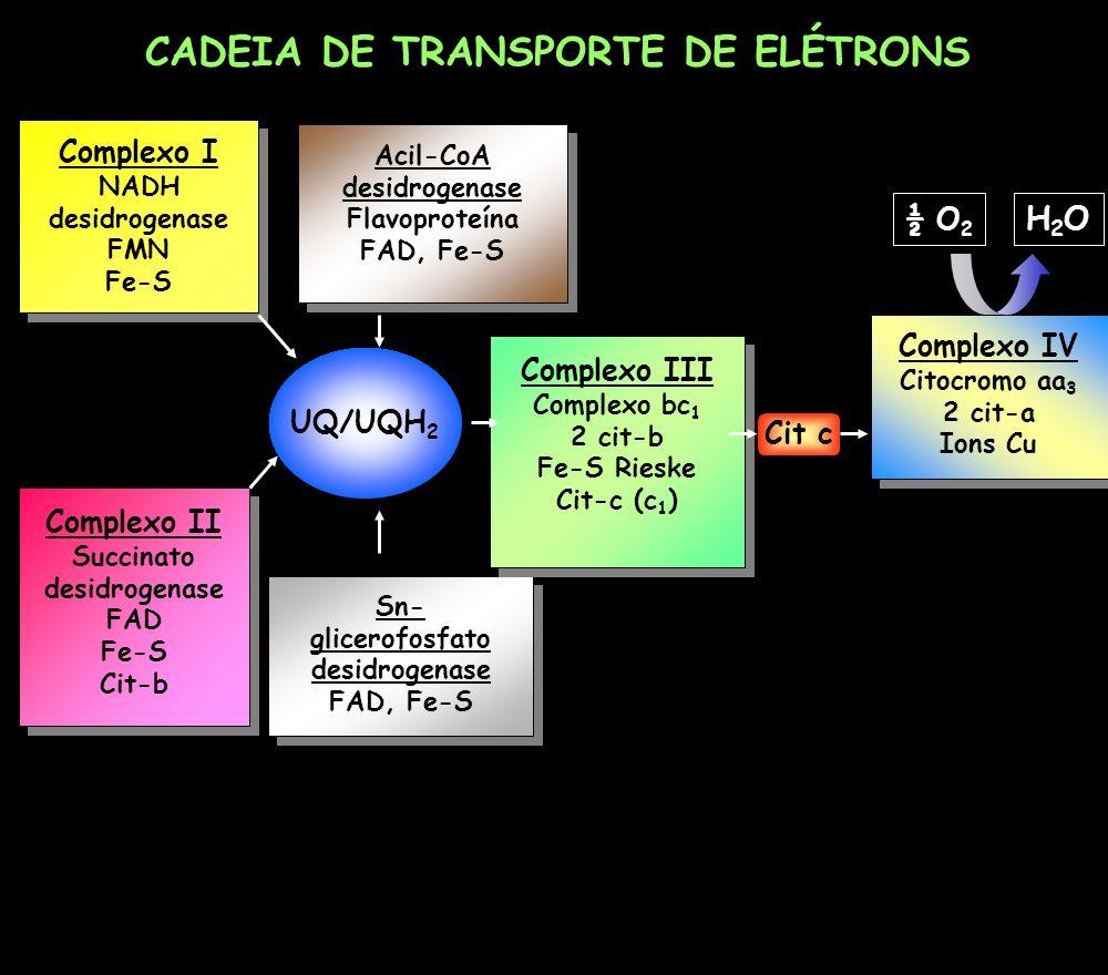 Complexo IV Citocromo aa 3 2 cit-a Ions Cu Complexo IV Citocromo aa 3 2 cit-a Ions Cu UQ/UQH 2 Complexo I NADH desidrogenase FMN Fe-S Complexo I NADH