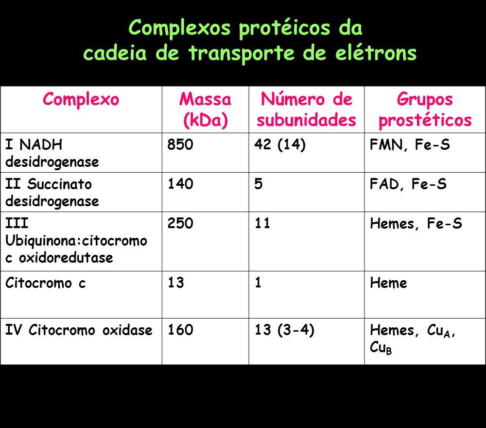ComplexoMassa (kDa) Número de subunidades Grupos prostéticos I NADH desidrogenase 85042 (14)FMN, Fe-S II Succinato desidrogenase 1405FAD, Fe-S III Ubi