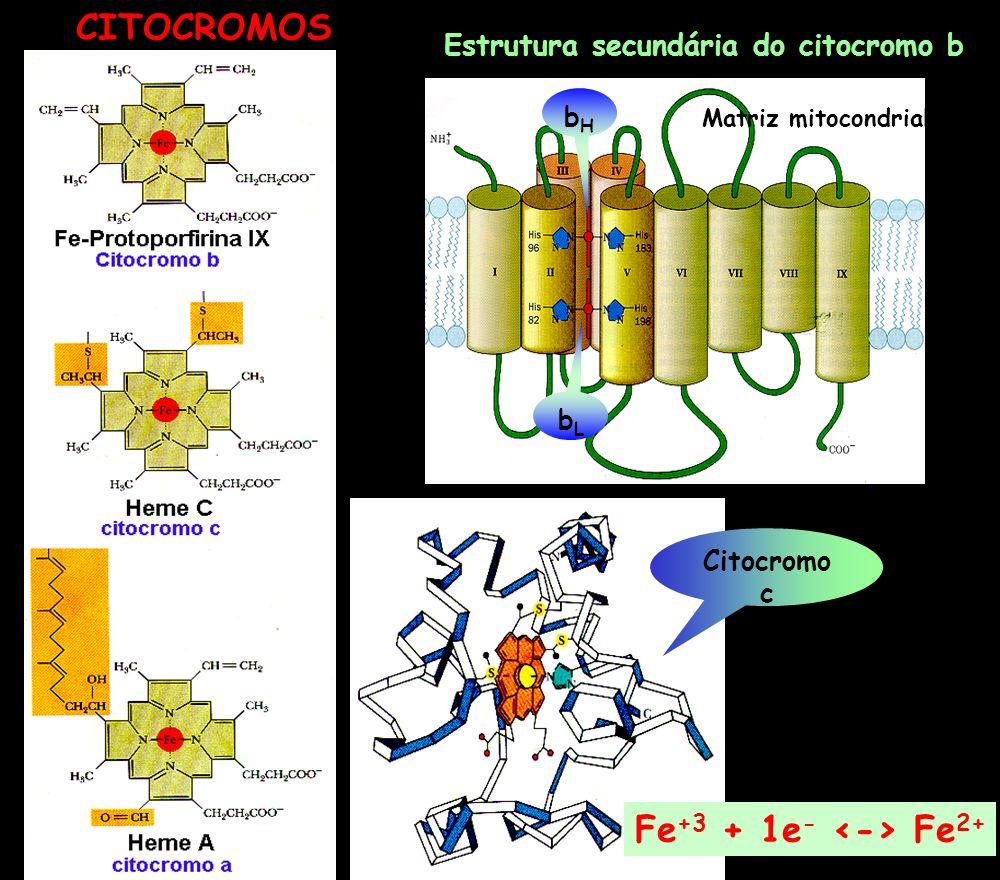 Citocromo c Matriz mitocondrial bHbH bLbL Estrutura secundária do citocromo b CITOCROMOS Fe +3 + 1e - Fe 2+